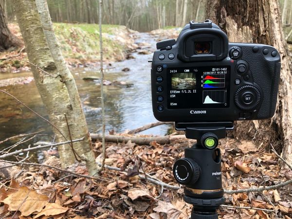 Setup Tripod Live View 5DMarkIV Canon Camera Technology Day Leaf No People Outdoors Camera - Photographic Equipment Tree Close-up Photography Themes Nature