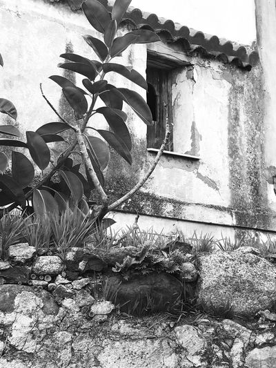 Finestra sul tempo Finestra Sul Tempo Plant Leaf Built Structure Growth Day No People Architecture Nature Outdoors Building Exterior Flower