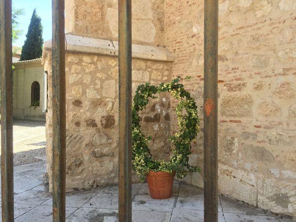 Architecture Built Structure Building Exterior Wall - Building Feature Growth Day Outdoors No People Plant Architectural Column Nature Alcalá De Henares. (Madrid)
