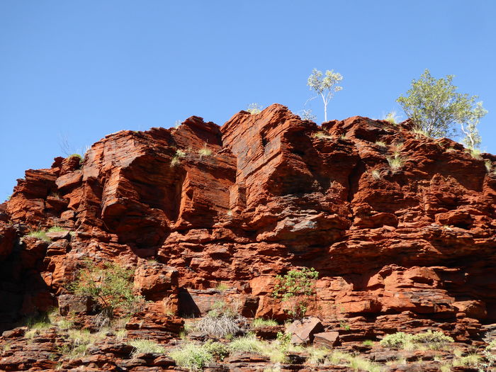 Blue Cliff Face Cliffs Eucalyptus Tree Forms In Nature Geological Formation Geology Landscape Layered Sandstone Rocks Lone Tree Nature No People Outdoors Patterns In Nature Red Earth Rock - Object Rock Layers Sandstone Layers Shapes , Lines , Forms & Composition Sky