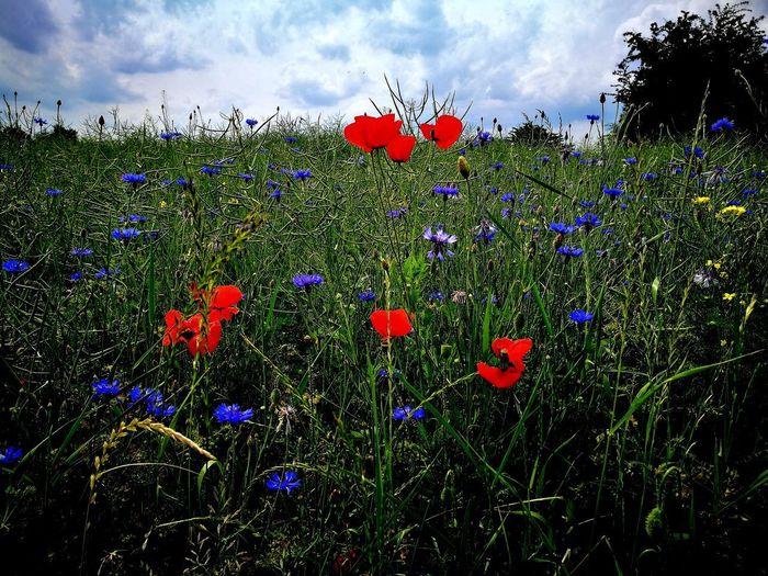 Frühsommer early summer Nature Beauty In Natureflower meadow