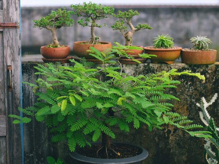 Close-up of potted plants in yard