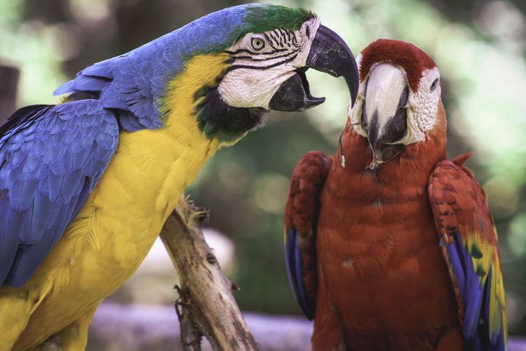 Close-up of macaws
