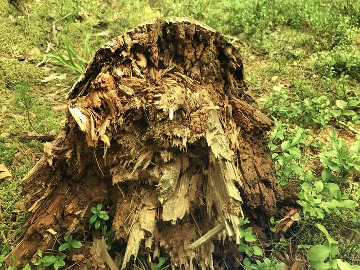 High angle view of tree stump on field