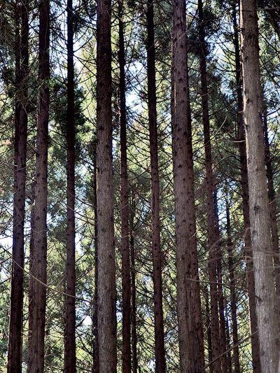 Forest OLYMPUS XZ-2