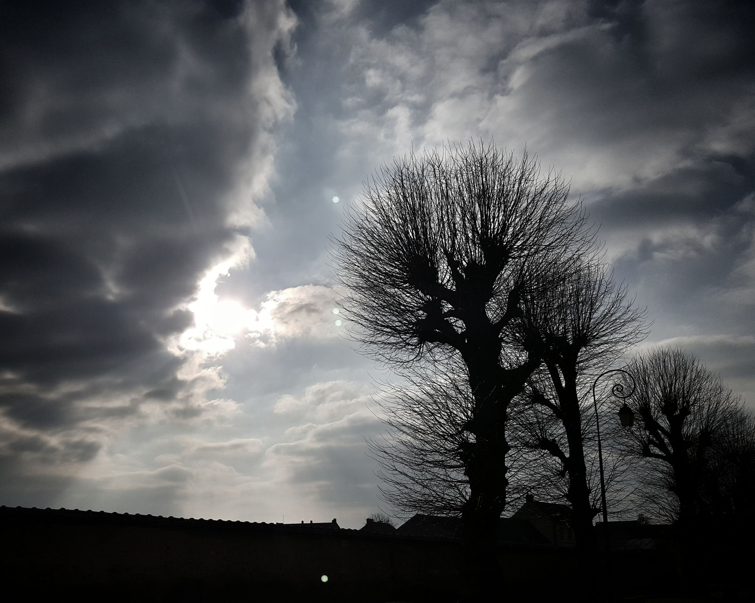 sky, cloud - sky, tree, silhouette, low angle view, tranquility, beauty in nature, nature, outdoors, no people, bare tree, day
