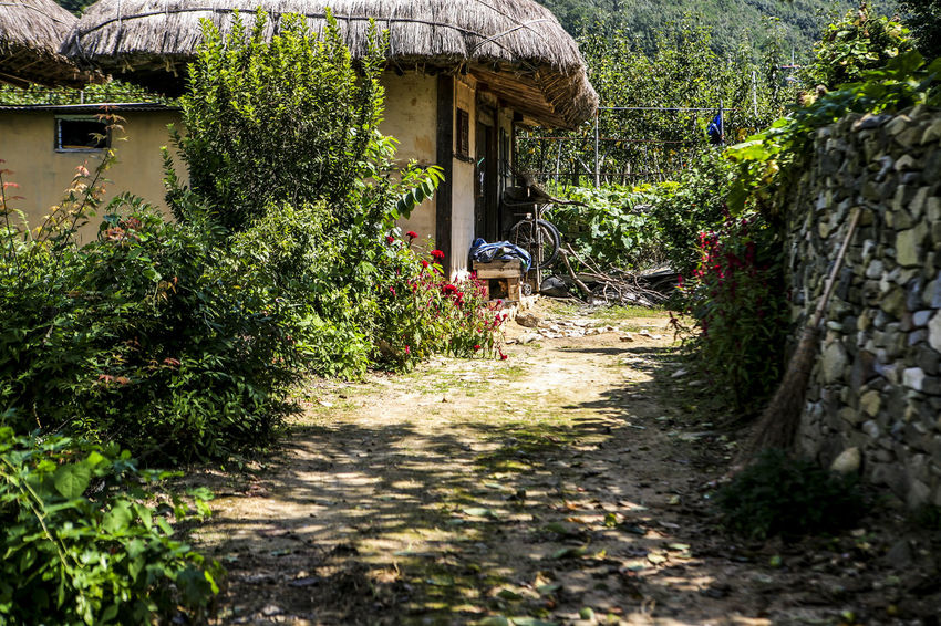 Abandoned Day Folk Village Forest Green Green Color Growing Growth House Leading Leaf Lush Foliage Narrow Nature No People Outdoors Plant Potted Plant Rural Scene Stone Wall Thatched House The Way Forward Tree Tropical Climate