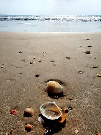 Beach Stilllife - Close up of Muscheln in the sand with blue sea and sky in background Blue Sky Blue Sea And Blue Sky Blue Sea Still Life From Below Travel Postcard Copy Space Space For Text Water Sea Beach Sand Shore Sky Horizon Over Water Close-up Sandy Beach Seashell Shell