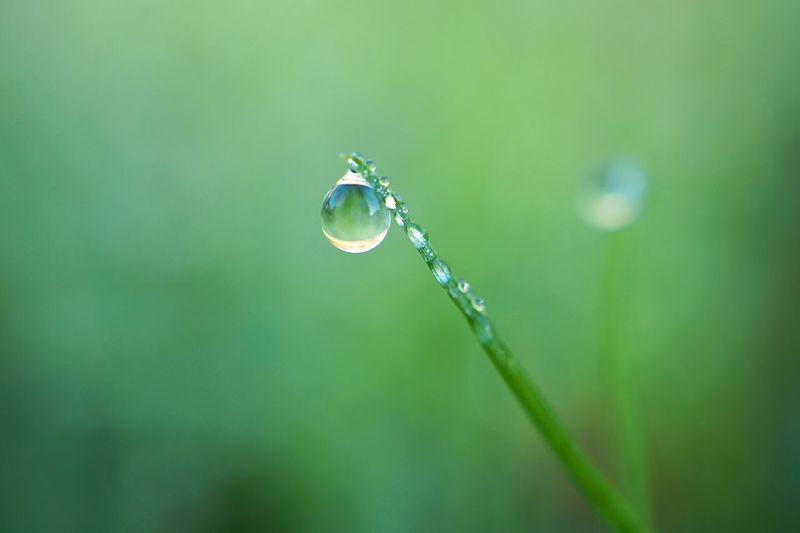 drops ont the green grass Grass Green Plant Leaves Drops Drop RainDrop Garden Nature Floral Freshness Beauty In Nature Beauty Fragility Selective Focus Water