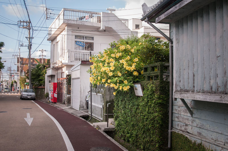 Japan Restraunt Architecture Building Exterior Built Structure Day Flower No People Ordinary Day Ordinary Sho Shop Wall - Building Feature