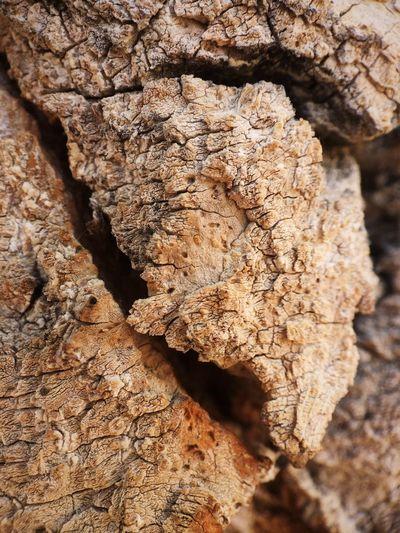 IPS2016Closeup Tree Bark Close Up Vscocam