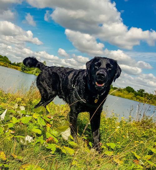 Water Pets Dog