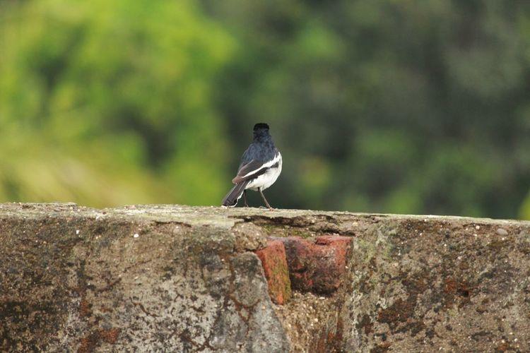 bird EyeEm Selects Bird Perching Full Length Closing Animal Themes Close-up Raven - Bird Sparrow