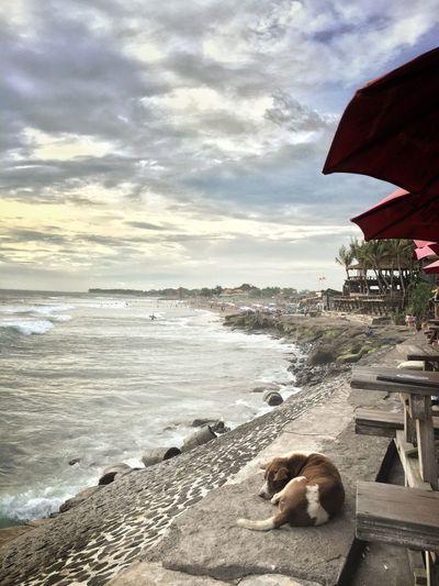 Echobeach Beach Sea Bali, Indonesia Surfing dog Cloud - Sky Life
