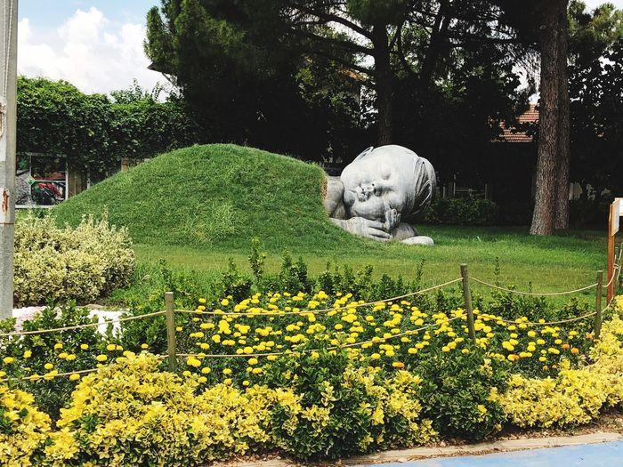 Turkey Sasalı Doğal Yaşam Parkı Izmir Plant Growth Green Color Nature Tree Beauty In Nature No People Flower Day Yellow
