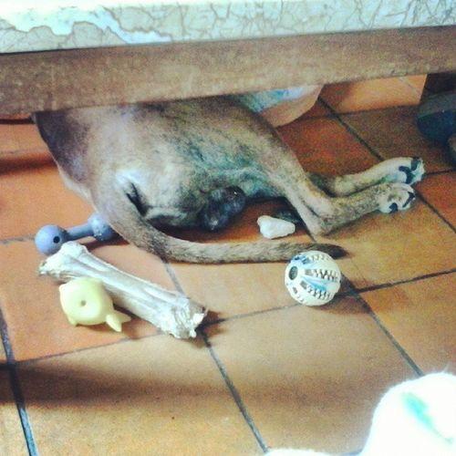 Um terço do meu cão e os seus brinquedos