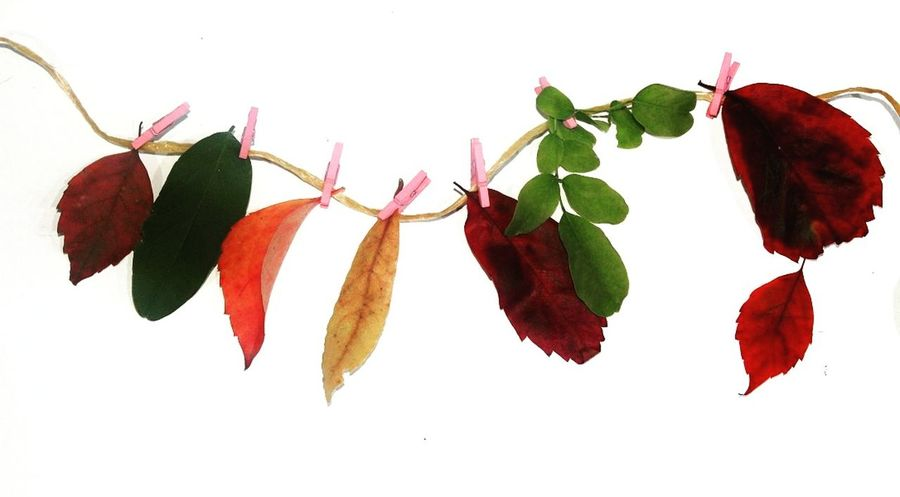 Foglie appese 🍁🍂🍃 Day No People Flower Autumn Red Freshness Verde Colors Italy Autumn Macro Fogliediautunno Red Connected By Travel Nature Naturelovers Nature Collection Foglie Leaves Foglie Verdi Fogliesecche Foglie Foglierosse Leaf White Background Close-up
