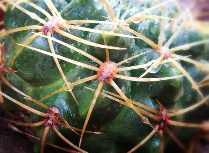 Nature Cactus Plant No People Growth Close-up Beauty In Nature Day Outdoors Prickly Pear Cactus HuaweiP9 Botanical Gardens Botanical My Botanical Garden