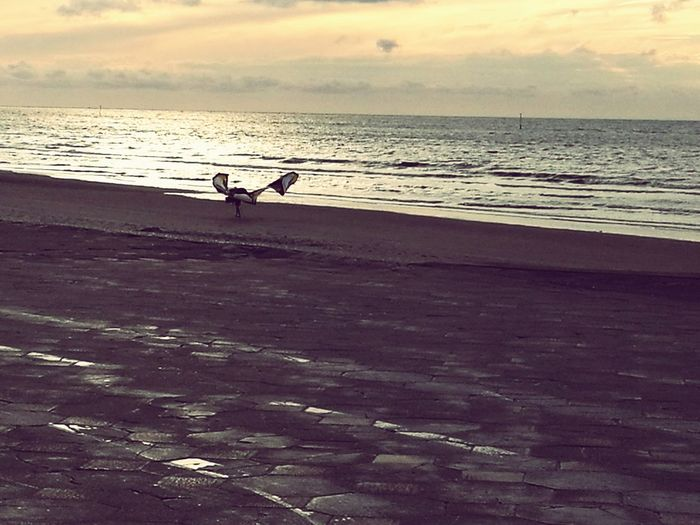 Wingman Sky Horizon Over Water Tranquil Scene Enjoying Life Beach Sand Unrecognizable Person Sunset Outdoors Calm
