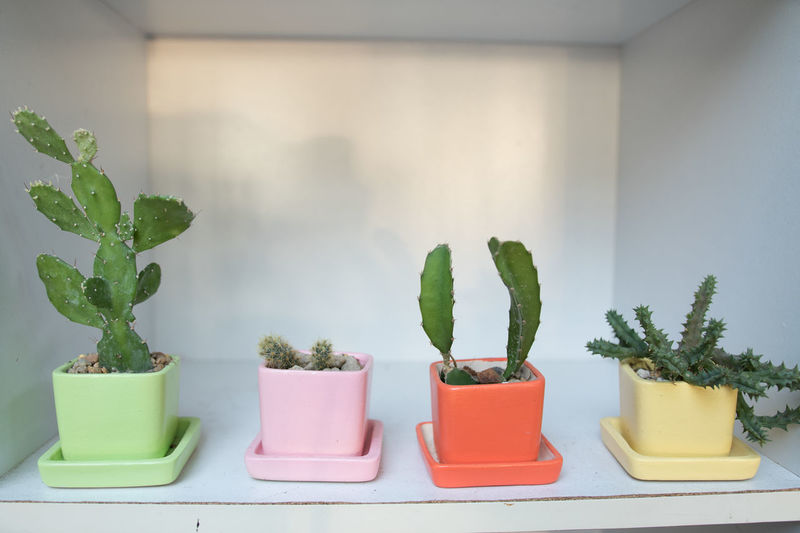 Arrangement Cactus Choice Container Day Domestic Room Flower Pot Green Color Growth Home Interior Houseplant Indoors  Leaf Nature No People Plant Plant Part Potted Plant Side By Side Succulent Plant Wall - Building Feature
