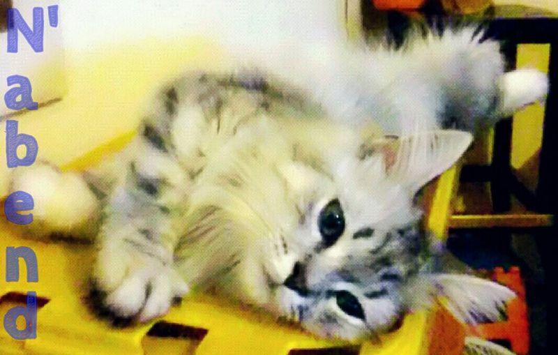 Berlin Spandau Benji Relaxing Cat♡ Sleeping Cats Relaxing Mixapp