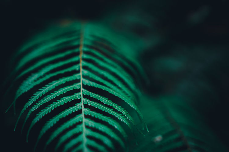 Green Color Leaf Plant Part Selective Focus Close-up Growth No People Plant Nature Fern Beauty In Nature Focus On Foreground Natural Pattern Pattern Day Frond Outdoors Fragility Vulnerability  Freshness Palm Leaf