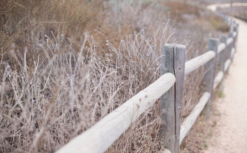 Wood - Material No People Field Day Outdoors Wooden Post Landscape Grass Plant Nature Beauty In Nature Close-up