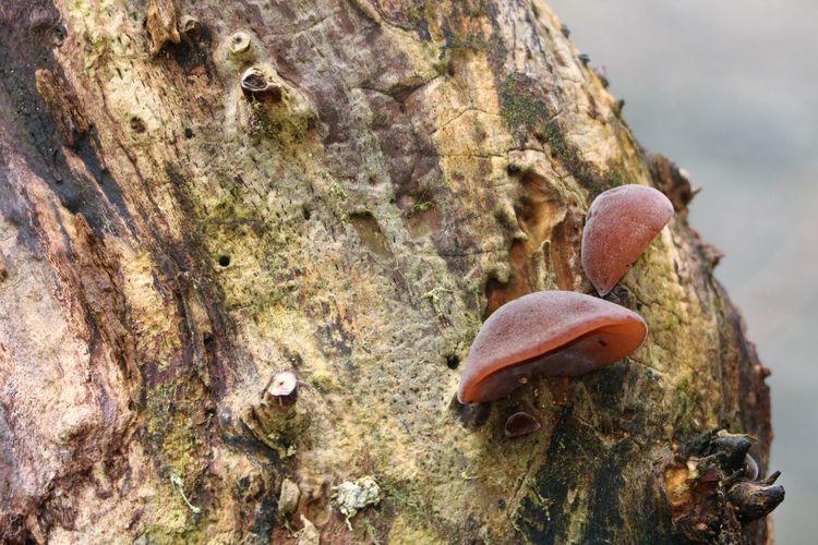 Fungi Growing Heterotrophic Nature Tree Damp Ecology Environment Eukaryote Fungi Outdoors Outside Outside Photography
