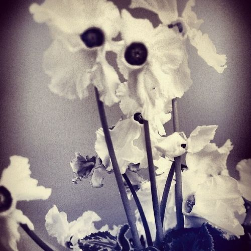 Flower White Bluez R étro rire ennuie du soir pétale full hate love tags voice hapiness hastags winter guess