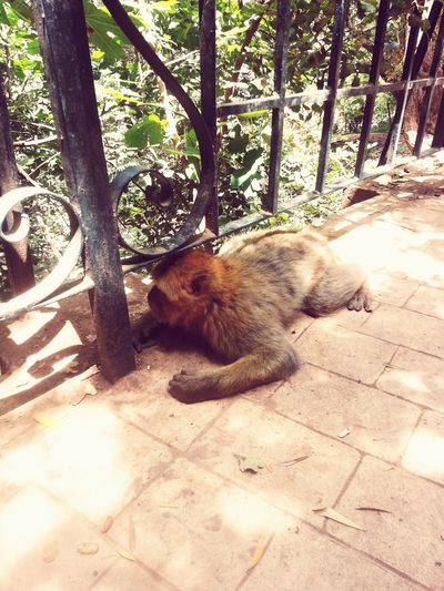 43 Golden Moments funny monkey