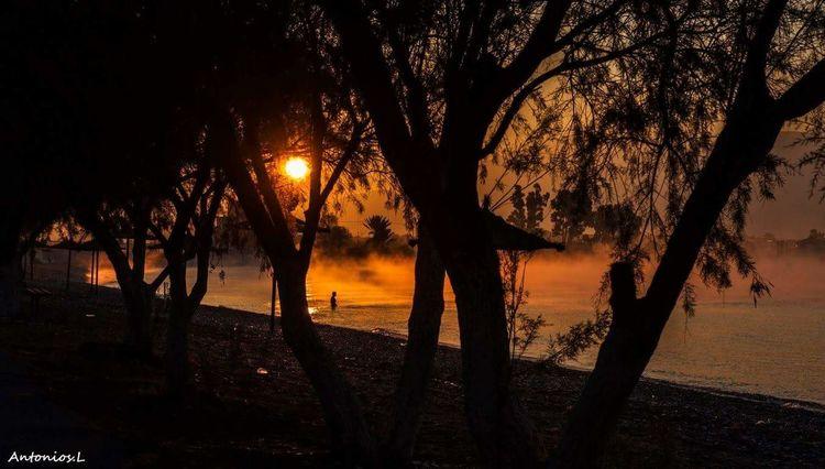 Swimming Girl Woman Tree Silhouette Sunset Reflection Beach Water Scenics