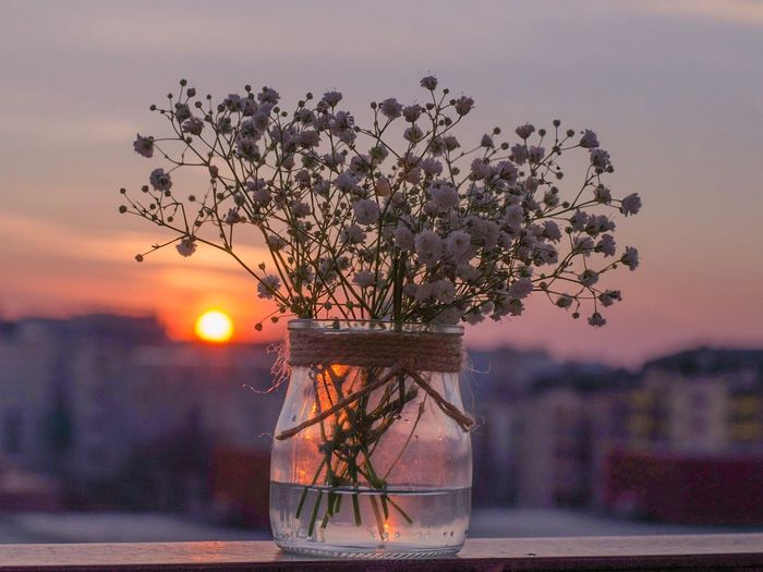Flower Sunset Table Sky Nature No People Outdoors Tree Beauty In Nature Focus On Foreground Vase Freshness Close-up Fragility Branch Day