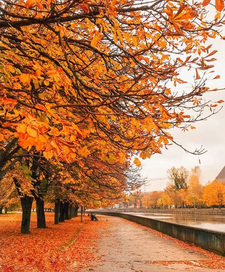 Tree Orange Color Plant Autumn Nature Change Sky Land Plant Part Architecture Beauty In Nature Growth Scenics - Nature Outdoors Field No People Day Agriculture Yellow Leaf