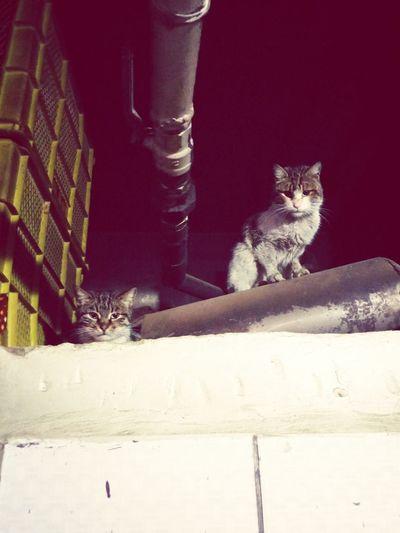 Cat EyeEm Cat Lovers Catsagram Cat♡ Eyem Best Shots EyeEm Nature Lover Sektör Yapım Street Art Adana