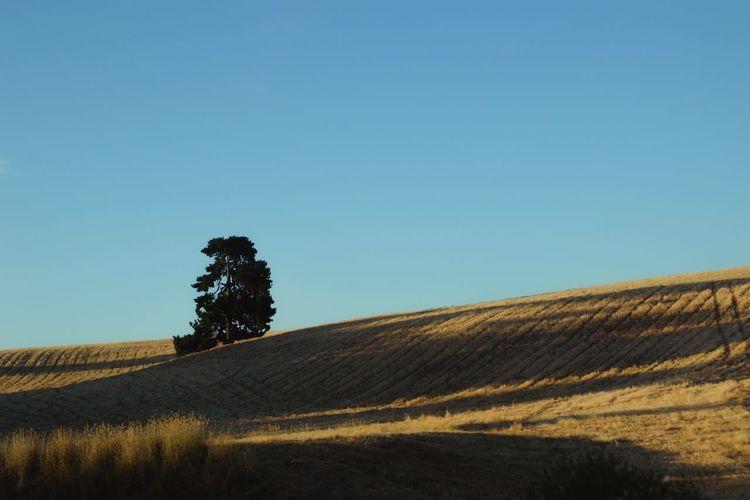 Dawn Tree Clear