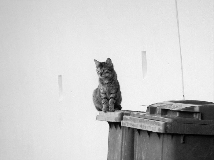 Cat sitting on garbage can against wall