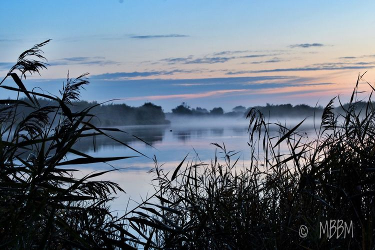 Sweet SUNDAY 🎀 Sky Water Nature Tranquil Scene Beauty In Nature Tranquility No People Sunset Scenics Cloud - Sky Outdoors Sea Tree Day Blue Sky Westkapelle Early Morning Sunrise Foggy Morning Fog
