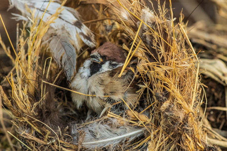 Animal Themes Animal Bird Young Bird Animal Nest Bird Nest Close-up Outdoors New Life Mouth Open Selective Focus Animal Family
