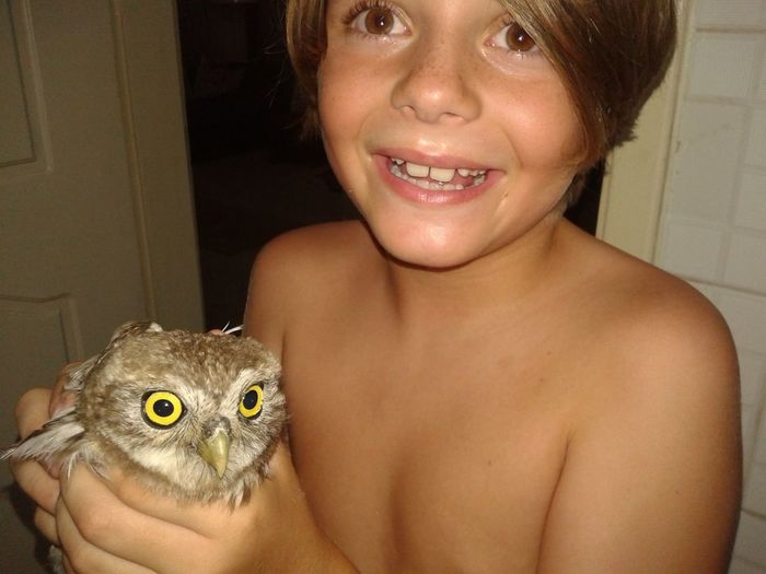 Beauty Boy Boy Holding Owl Cute Boys With Pet Boys With Tattoo Casual Clothing Caught You!! Close-up Cute Focus On Foreground Front View Hand On Chin Happy Boy With Ow Headshot Holding Owl Home Human Face Leisure Activity Lifestyles Mouth Open Owl With Yellow Person Portrait Yellow Flower