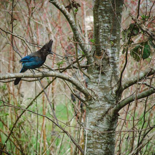 Bird perching on bare tree