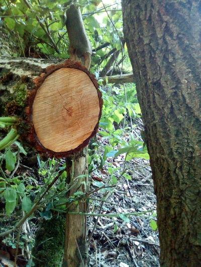 Baum stam Tree