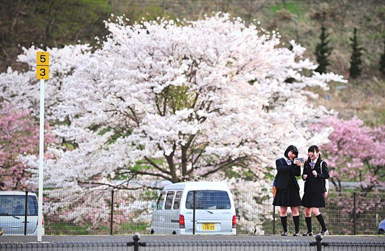 青春 ホーム Blooming Flower Blooming Youthful Spring Japan Japan Photography FUKUSHIMA Nikon Streetphotography Relaxing EyeEm Nature Wonderful EyeEm Nature Lover Lovely Beautiful Beautiful Nature Young People Hello World Lovelife Cute