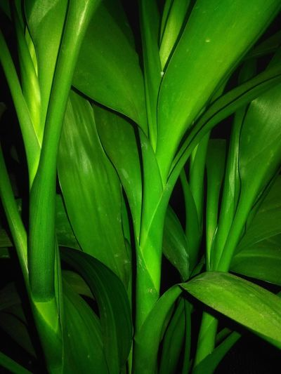 Close-up of plants against black background