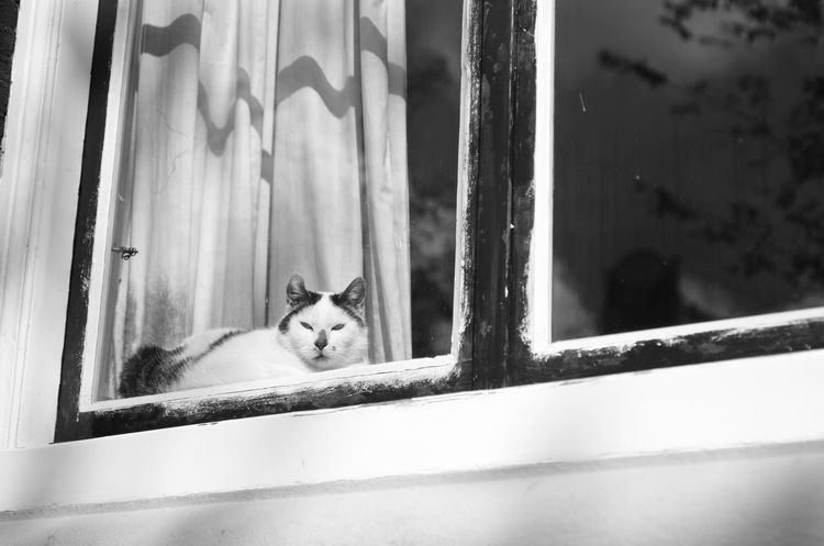 Hidden cat, which is spotted Animal Themes Black And White Blackandwhite Cat Curtain Day Domestic Animals Domestic Cat Hidden Looking At Camera Looking Through Window No People One Animal Pets Portrait Of Children Window Pet Portraits Black And White Friday