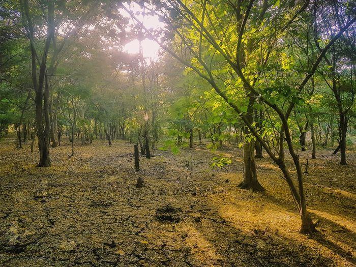Sunset Tree Nature Forest Landscape Tranquil Scene Sunlight Scenics No People Google Pixel sunset #sun #clouds #skylovers #sky #nature #beautifulinnature #naturalbeauty photography landscape Lost In The Landscape