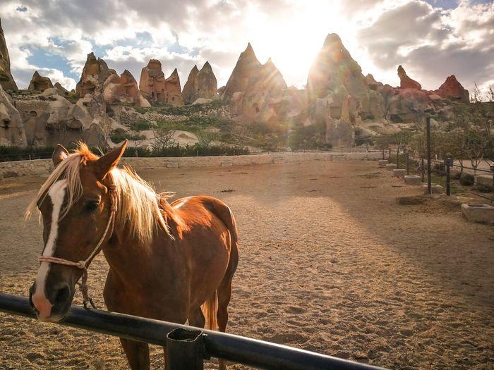 Cappadocia - the valley of wild horses. amazing morning.
