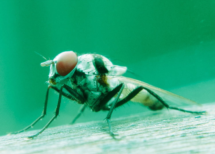Fly Close-up Macro Insect Animal Themes Housefly Animal Eye Virus Spreading 3XSPUnity