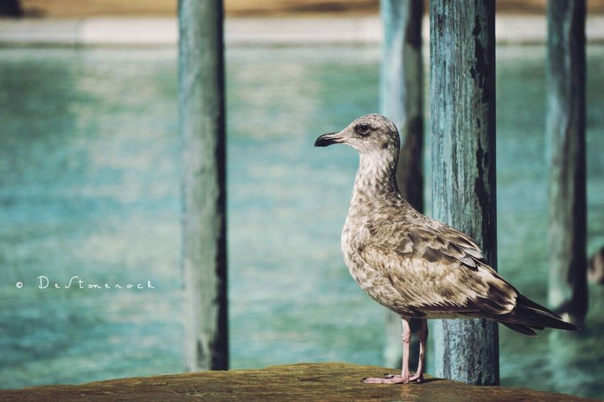 One Animal Bird Perching Camera Practice Photography Taking Pictures Testing Camera