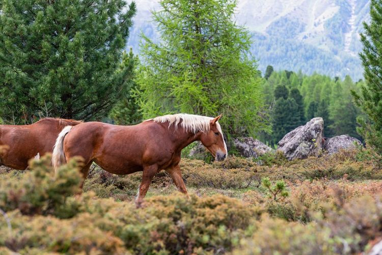 Side view of horses on mountain