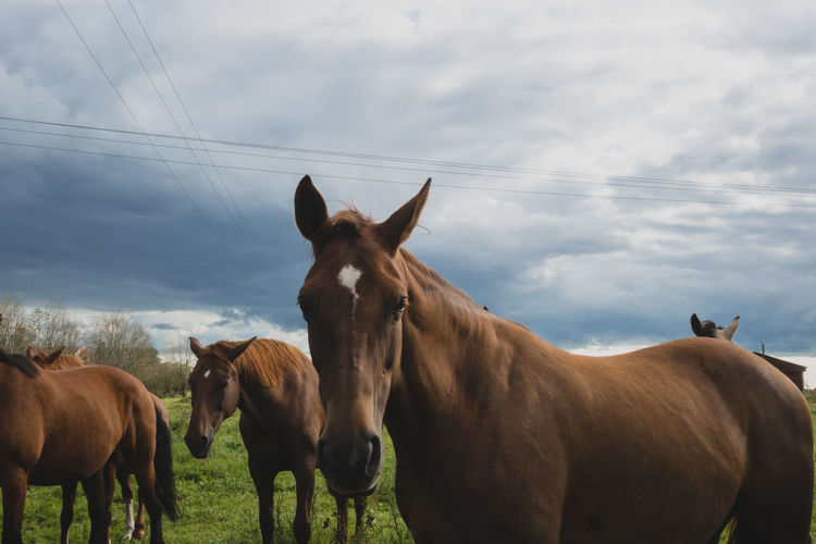 Horses Standing On Field Against Cloudy Sky